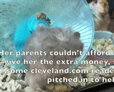 Hamster - hamster