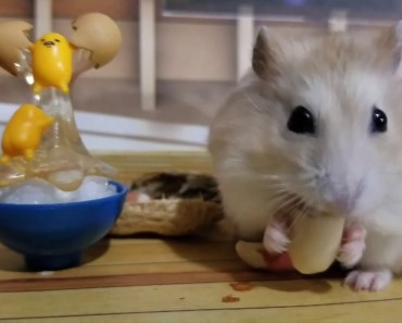 Happy Hamster Eats Peanut In Tiny Mansion [Cute Hamster Vid] - happy hamster eats peanut in tiny mansion cute hamster vid