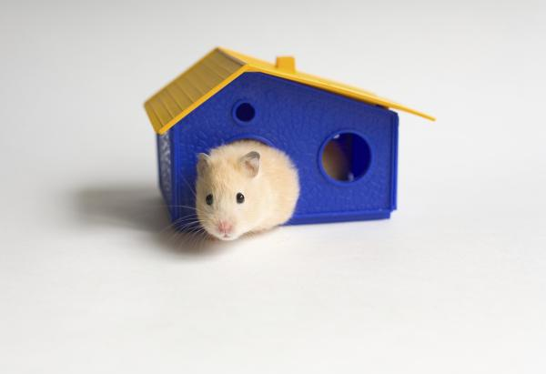 How to clean a Hamster?