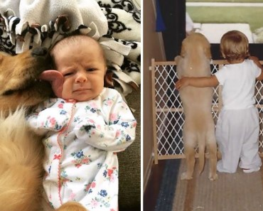 If You Don't Think Your Kids Need A Dog After Seeing These Pics, You Must Be A Cat - if you dont think your kids need a dog after seeing these pics you must be a cat