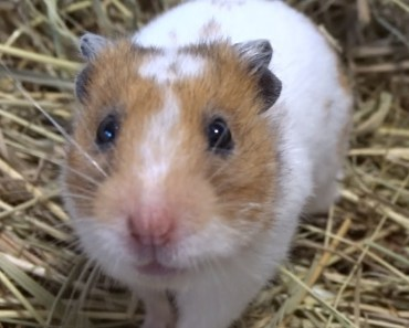 It's funny if you blow a hamster - its funny if you blow a hamster