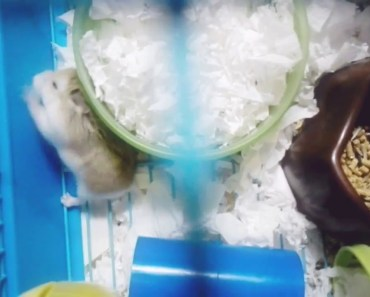 My Cute and Funny Robo Hamster! Part 2 - my cute and funny robo hamster part 2