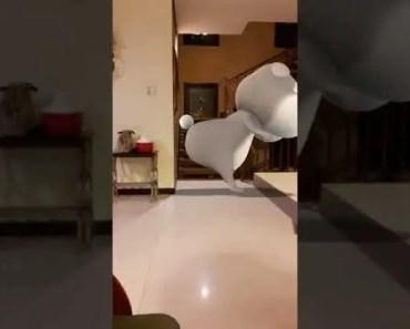 my hamster is dancing so funny - my hamster is dancing so funny