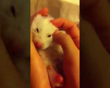 My hamster is eating (a bit funny) - my hamster is eating a bit funny