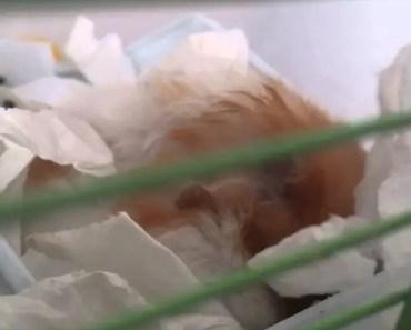 My hamster makes weird noises. Help. - my hamster makes weird noises help