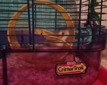 My hamsters playing around - my hamsters playing around