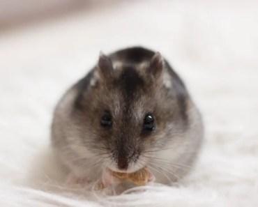 ORGANISING MY HAMSTER TREATS | VLOG - organising my hamster treats vlog