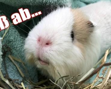 Praline bekommt DOCH den Fuß ab und dem Hamster geht es auch nicht gut... | Die Müffelstücke - praline bekommt doch den fus ab und dem hamster geht es auch nicht gut die muffelstucke