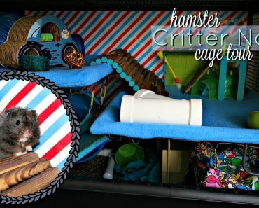 Syrian Hamster Cage Tour (Gimli) || Midwest Critter Nation - syrian hamster cage tour gimli midwest critter nation