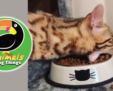 TOP 8 FUNNY CAT & HAMSTER VIDEOS | CUTE Cat & Dog Videos | Funny Animal Videos! ANIMALS DOING THINGS - top 8 funny cat hamster videos cute cat dog videos funny animal videos animals doing things