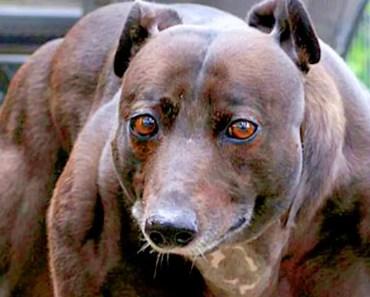 10 Most Unusual Pets Ever - 10 most unusual pets ever