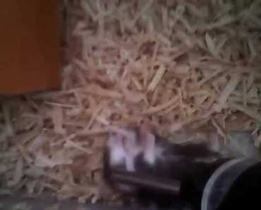 FUNNY HAMSTER - 1524472255 funny hamster