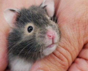 8 Things Your New Hamster is Trying to Tell You: New Pet Tips by Petco - 8 things your new hamster is trying to tell you new pet tips by petco