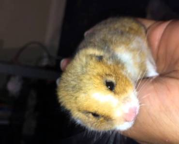 Amazing Video, Dead hamster brought back to life. - amazing video dead hamster brought back to life