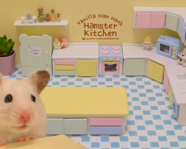 Building the Hamster Kitchen | Part 1 - building the hamster kitchen part 1