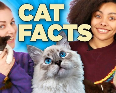 Cat Lovers Learn Amazing Facts About Cats While Playing With Kittens - cat lovers learn amazing facts about cats while playing with kittens