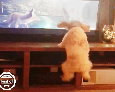 Dog Jumps With Animals On TV + Funny & Cute Videos April 2018 | The Dodo Best Of - dog jumps with animals on tv funny cute videos april 2018 the dodo best of