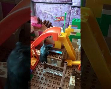 Funny hamster playground - funny hamster playground