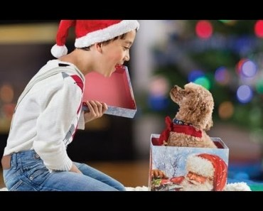 Funny Kid's Unbelievable Reactions When Getting A Puppy Video Compilation 2017 - funny kids unbelievable reactions when getting a puppy video compilation 2017