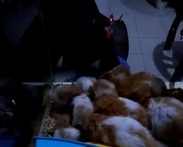 Funny thing my Hamster do! - funny thing my hamster do