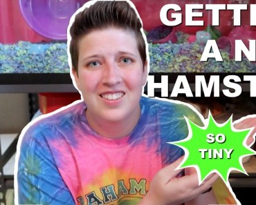 GETTING A NEW HAMSTER (and setting up his cage) - getting a new hamster and setting up his cage