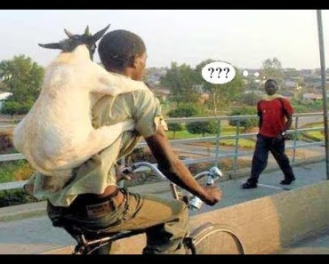 GOATS Are Such FUNNY ANIMALS - Cute And Funny Goat Videos Compilation 2018 [BEST OF] - goats are such funny animals cute and funny goat videos compilation 2018 best of