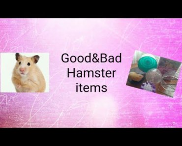 Good&Bad Hamster items - goodbad hamster items