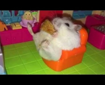Hamster | Hamster Cage Tour | Cute Hamster Doing Funny Things Part 3 - hamster hamster cage tour cute hamster doing funny things part 3
