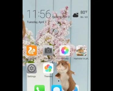 hamster in phone - hamster in phone