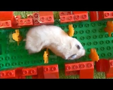 Hamster Lego Obstacle Course - hamster lego obstacle course