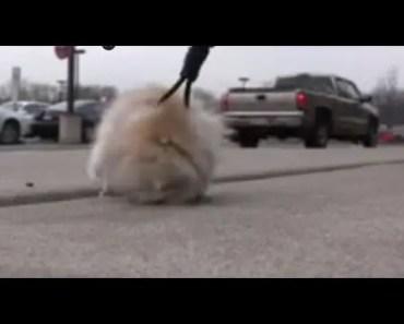 Hamster on a Leash - hamster on a leash