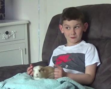I wanna buy your hamster - i wanna buy your hamster