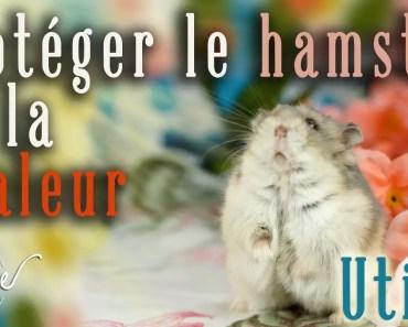 Protéger son hamster de la chaleur - proteger son hamster de la chaleur