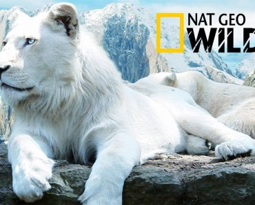 The Rare and Exotic Animals - National Geographic Documentary - the rare and exotic animals national geographic documentary