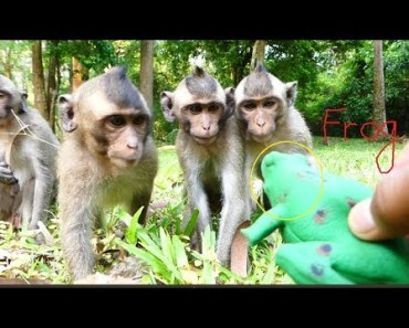 Video funny baby monkey 2018, Funny monkey vs frog - video funny baby monkey 2018 funny monkey vs frog