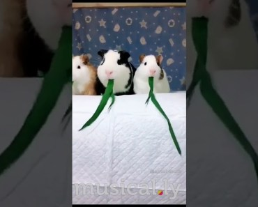 147.8k #hamster #pet #funny #animals #happy #canada #petsofMusically #neveralone #a #NELLIKKA #a - 147 8k hamster pet funny animals happy canada petsofmusically neveralone a nellikka a