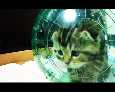 Funny Cats | Cute Kittens and spacecraft ( Kitten in Hamster Ball ) - 1525762966 funny cats cute kittens and spacecraft kitten in hamster ball
