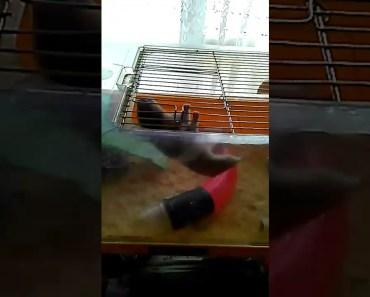 Funny hamster - 1527797878 funny hamster