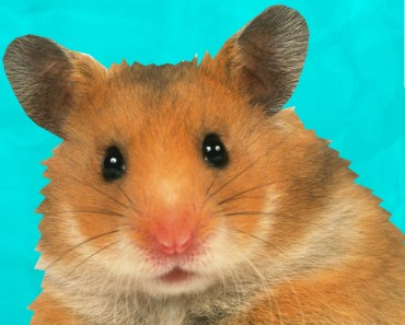 6 Weird Hamster Facts You May Not Know | Fuzzy Friday - 6 weird hamster facts you may not know fuzzy friday