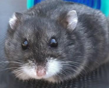 A Tiny Hamster on a Big Trampoline - a tiny hamster on a big trampoline