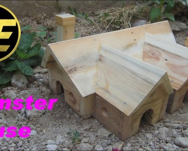 Building Hamster House - building hamster house