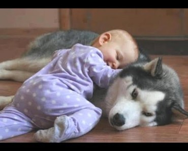 Cute Babies HUGGING Dogs And Cats - cute babies hugging dogs and cats