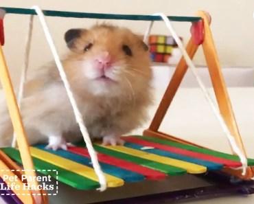 DIY Hamster Swing Set | The Dodo Pet Parent Hacks - diy hamster swing set the dodo pet parent hacks