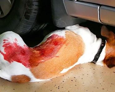 DOG PRANK ON GIRLFRIEND!!! - dog prank on girlfriend