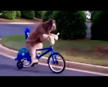 Funny dogs compilation - The World's Most Funny Dog Videos 2015 - funny dogs compilation the worlds most funny dog videos 2015
