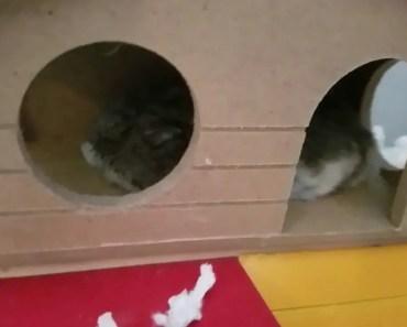 Funny Hamster Sleeping - funny hamster sleeping