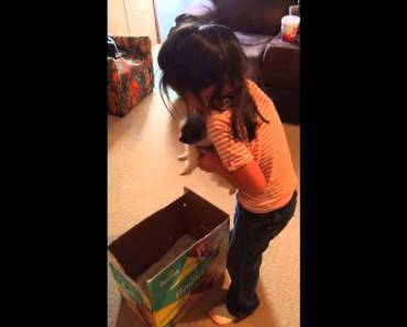 Girl Thinks Puppy Is A Hamster - girl thinks puppy is a hamster