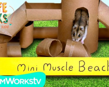 Hamster Jungle Gym + Other Small Pet Hacks | LIFE HACKS FOR KIDS - hamster jungle gym other small pet hacks life hacks for kids