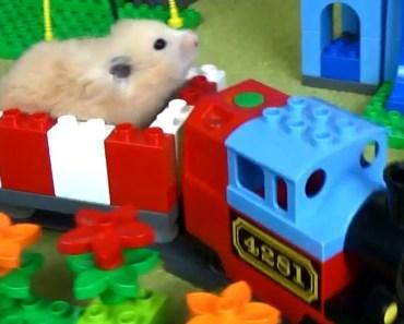 Hamster LEGOLAND - hamster legoland