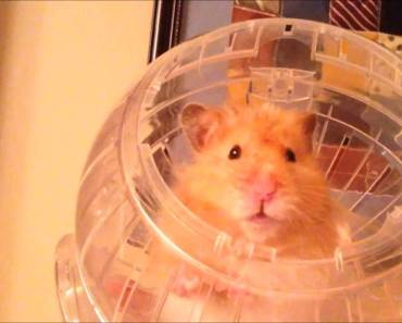 Hamster Meditation: Snowflake Devours a Small City: Funny Meditation for Really Stressful Days:) - hamster meditation snowflake devours a small city funny meditation for really stressful days